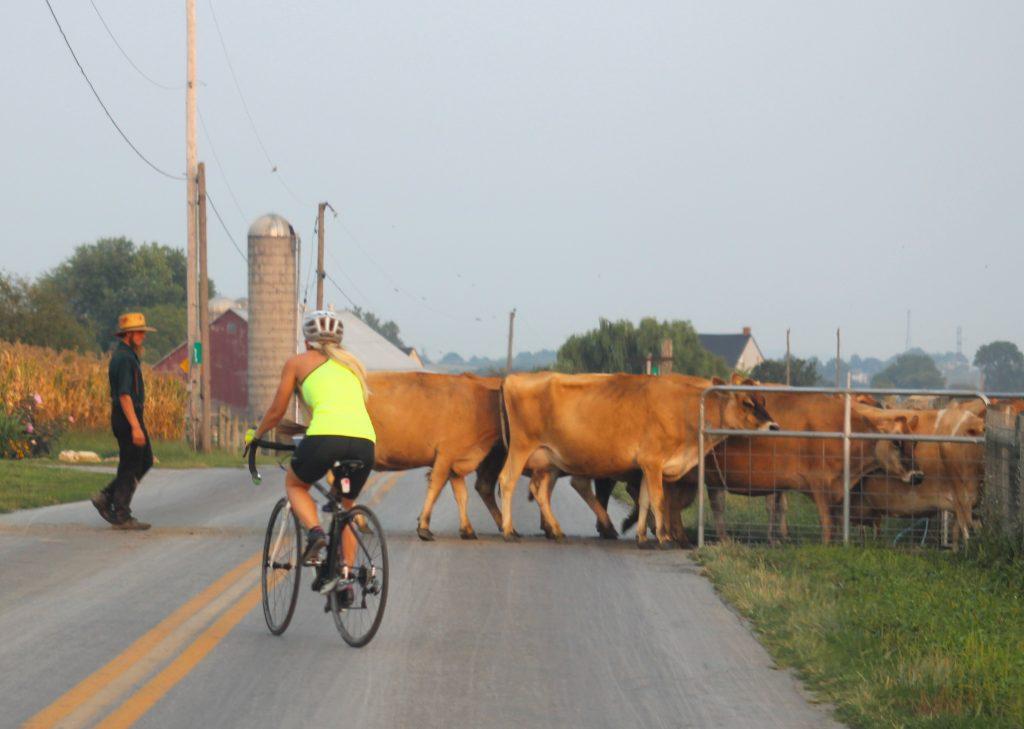 raw-dairy-herd